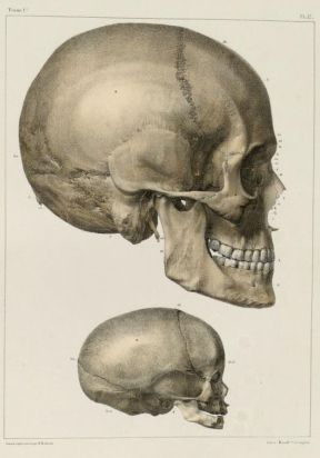 human-body-vintage-scientific-illustration-naturalist-drawing-0002