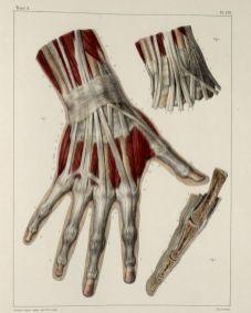human-body-vintage-scientific-illustration-naturalist-drawing-0003