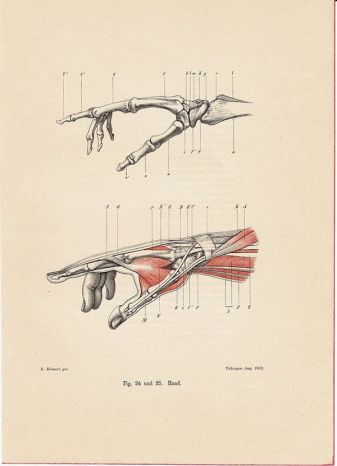 human-body-vintage-scientific-illustration-naturalist-drawing-0007