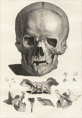 human-body-vintage-scientific-illustration-naturalist-drawing-0015