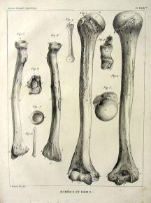 Vintage medical human body anatomy illustration