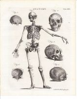 human-body-vintage-scientific-illustration-naturalist-drawing-0019