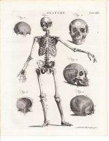 human-body-vintage-scientific-illustration-naturalist-drawing-0019