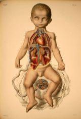human-body-vintage-scientific-illustration-naturalist-drawing-0020