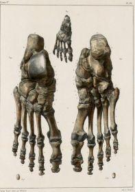 human-body-vintage-scientific-illustration-naturalist-drawing-0021