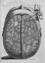 human-body-vintage-scientific-illustration-naturalist-drawing-0022