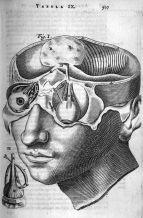 human-body-vintage-scientific-illustration-naturalist-drawing-0025