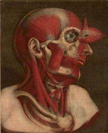 human-body-vintage-scientific-illustration-naturalist-drawing-0027