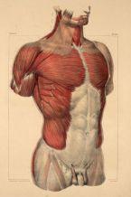 human-body-vintage-scientific-illustration-naturalist-drawing-0030
