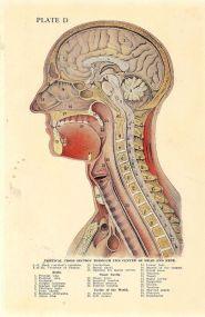 human-body-vintage-scientific-illustration-naturalist-drawing-0033