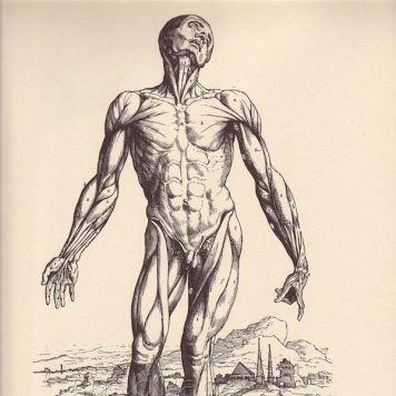 human-body-vintage-scientific-illustration-naturalist-drawing-0034