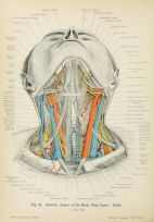 human-body-vintage-scientific-illustration-naturalist-drawing-0041