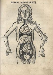 human-body-vintage-scientific-illustration-naturalist-drawing-0042