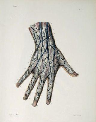 human-body-vintage-scientific-illustration-naturalist-drawing-0046