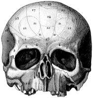 human-body-vintage-scientific-illustration-naturalist-drawing-0052