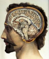 human-body-vintage-scientific-illustration-naturalist-drawing-0055