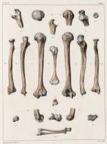 human-body-vintage-scientific-illustration-naturalist-drawing-0062