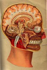 human-body-vintage-scientific-illustration-naturalist-drawing-0063