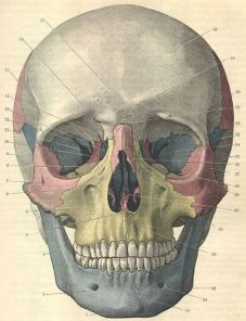 human-body-vintage-scientific-illustration-naturalist-drawing-0065