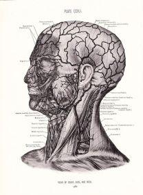 human-body-vintage-scientific-illustration-naturalist-drawing-0068