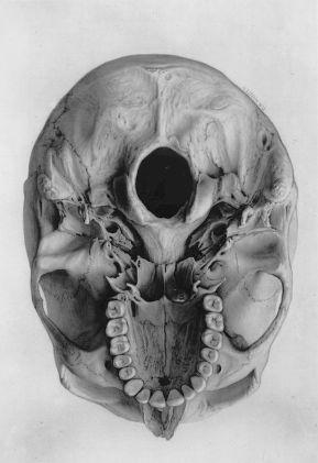 human-body-vintage-scientific-illustration-naturalist-drawing-0072