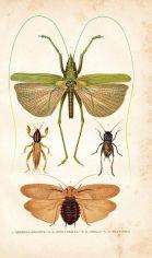 scientific-illustration-naturalist-drawing-0002