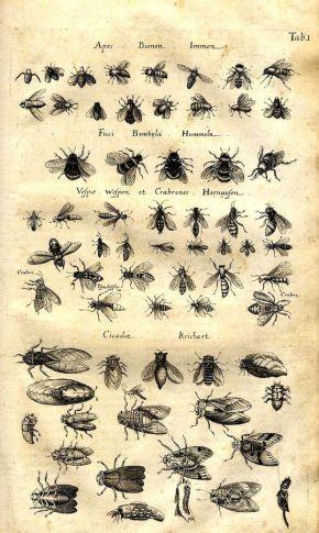 scientific-illustration-naturalist-drawing-0007