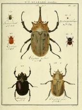 scientific-illustration-naturalist-drawing-0009