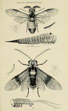 Naturalist Drawing Illustration