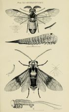 Naturalist Drawing Illustration