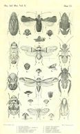 famous entomology drawers