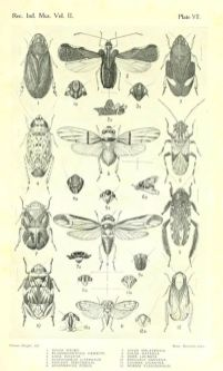 famous entomology drawers