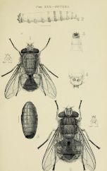scientific-illustration-naturalist-drawing-0020