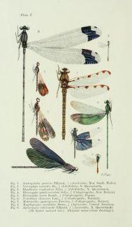 scientific-illustration-naturalist-drawing-0035