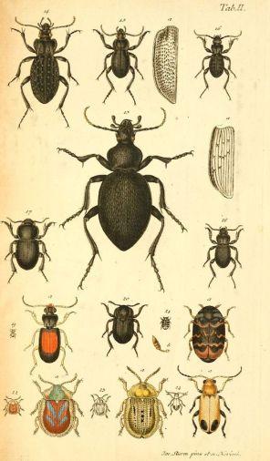 scientific-illustration-naturalist-drawing-0040