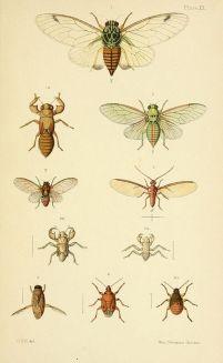 scientific-illustration-naturalist-drawing-0043