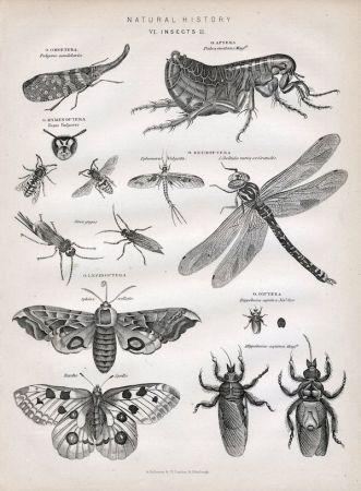 Entomology Ilustration