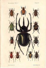 scientific-illustration-naturalist-drawing-0046