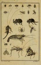 Scientific & Naturalist Drawings