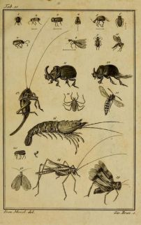 Scientific & Naturalist Drawings