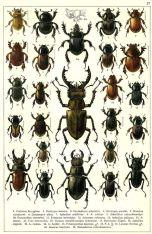 scientific-illustration-naturalist-drawing-0055