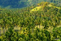 palmtrees-west-coast-lombok