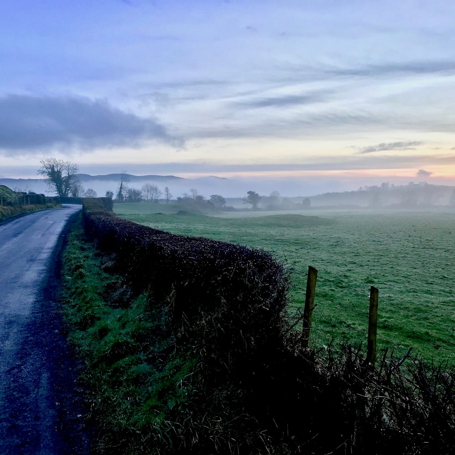 Mystical foggy morning in Donegal, Ireland along a paved country road with a hedge serving as a fence for local farm animals.