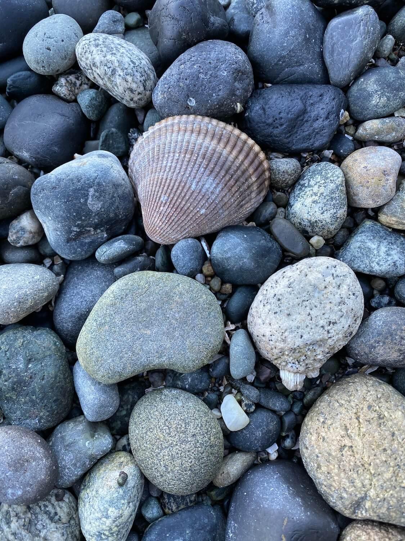 A seashell sits on the beach amongst large rocks.