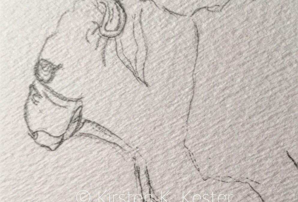 Sketching bulldogs
