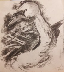 Charcoal sketch: swan 30th June
