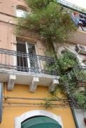 Taormina, celui au jasmin