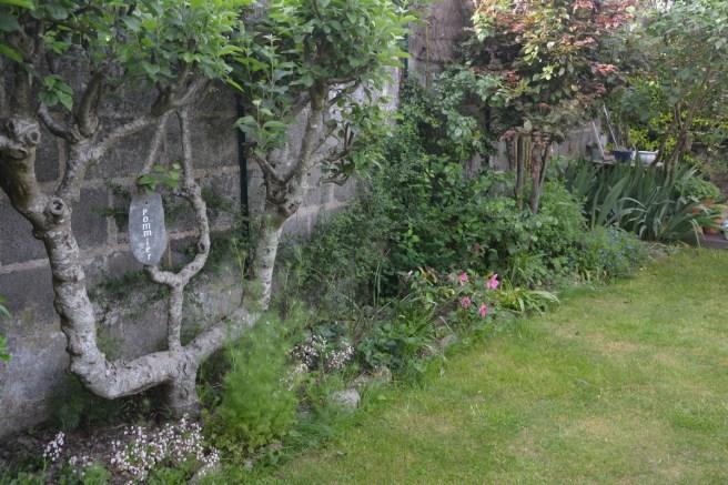 exposition sud est: pommier, tout jeune rosier de Chine mutabilis, jasmin d'hiver, nigelle, prunus, grémil, iris, lilas