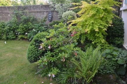 Exposition nord, soleil du matin: fougère, érable, rhododendron, azalée, hortensia, coeur de Marie, chèvrefeuille, jasmin officinale, arbustes divers