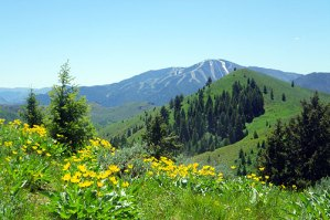 Sun Valley with summer wildflowers